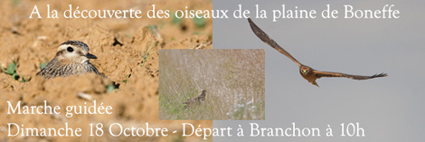 Marche guide -  la dcouverte des oiseaux de la plaine de Boneffe