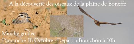 Marche guidée - à la découverte des oiseaux de la plaine de Boneffe