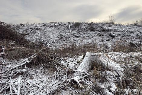 Paysage dévasté après une coupe de bois (photo Alex Gulphe) :: un patrimoine à préserver