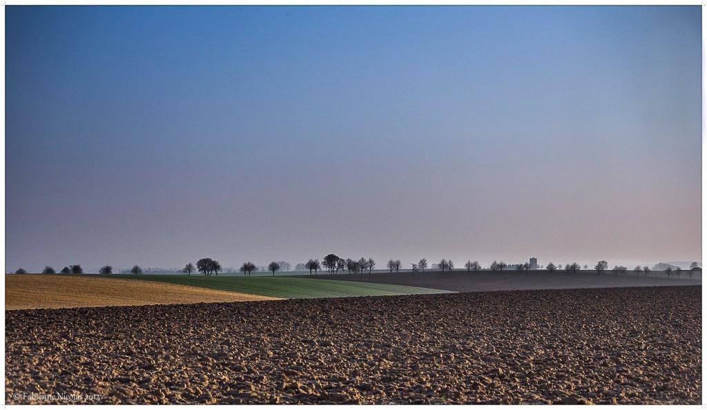 La Plaine de Boneffe - Phorto de Fabienne NICOLAS - AOUT 2014
