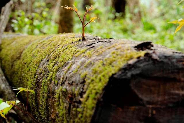 Abattu l'arbre reprend vie